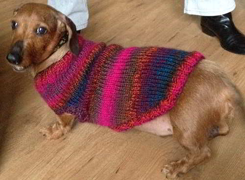 Pattern17 English Free Knit Pattern Daschund Dog Clothes