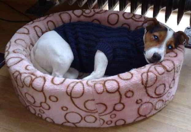 38 Breien Hondenkleding Hondentrui Sweater Patronen Voor Hond