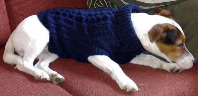 38 English Dog Sweaters For Pets Knitting Patterns Dogs